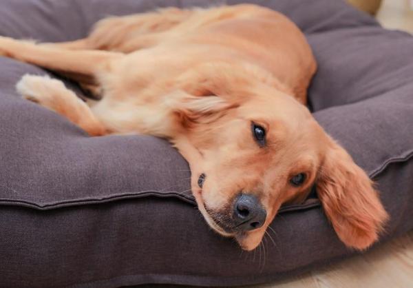 Pup Potato Dog Bed