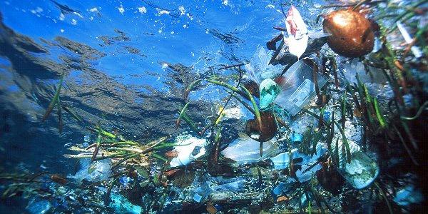 """Résultat de recherche d'images pour """"sacs en plastique pollution"""""""