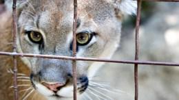 Wild Animal Owners Surety Bond