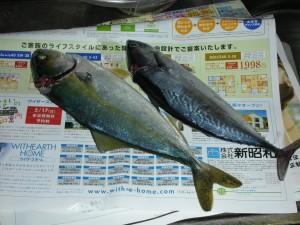 国府津海岸の釣果