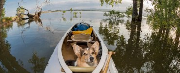 how to kayak with a dog
