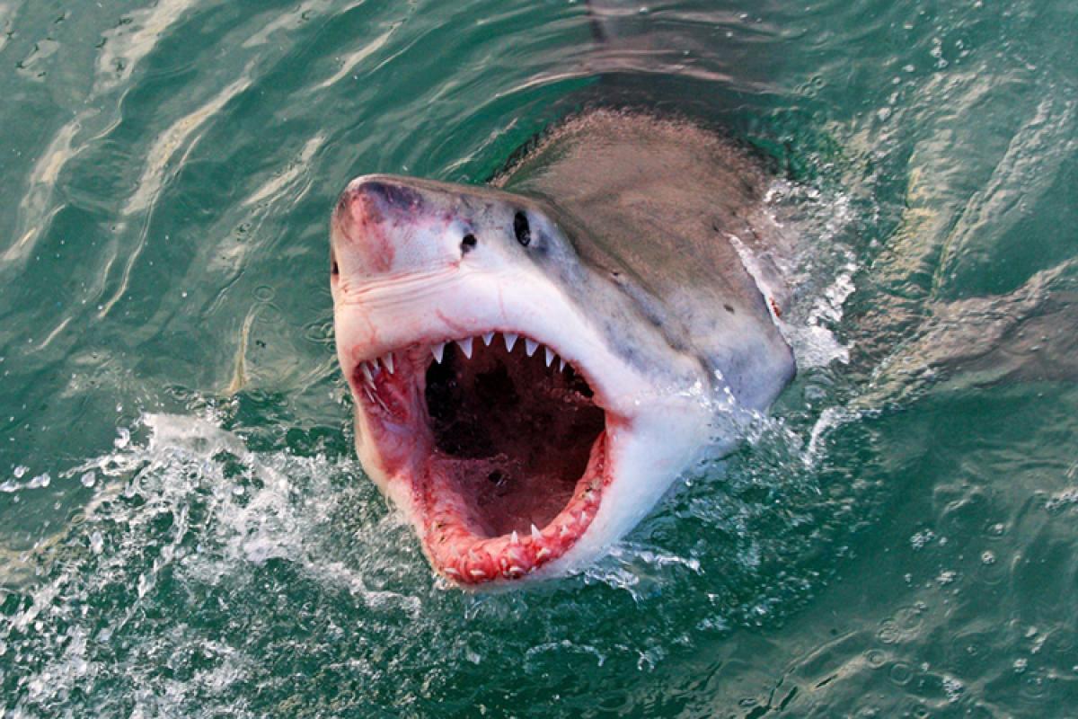 The Deadliest And Most Dangerous Shark Species