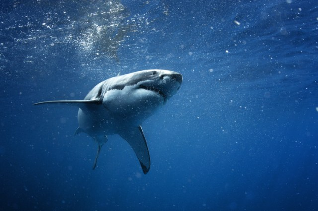 Shark attacks: the market has plenty of shark repellents and deterrents | Photo: Shutterstock