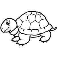 Snapping Turtle » Coloring Pages » Surfnetkids