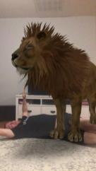 Being attacked by lion in our living room! Courtesy of Google 3D Animals