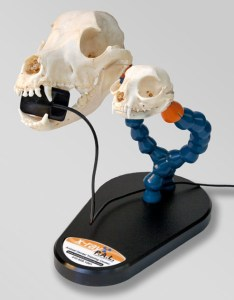 ray    also veterinary dental radiographic positioning models rh surgiden