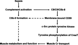 Complement regulatory protein CD59 involves c-SRC related
