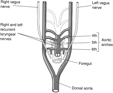 Identification and Monitoring of the Recurrent Laryngeal
