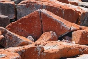 Lichen covered rocks at Bicheno