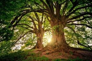 Conoscere e Riconoscere Alberi e Arbusti