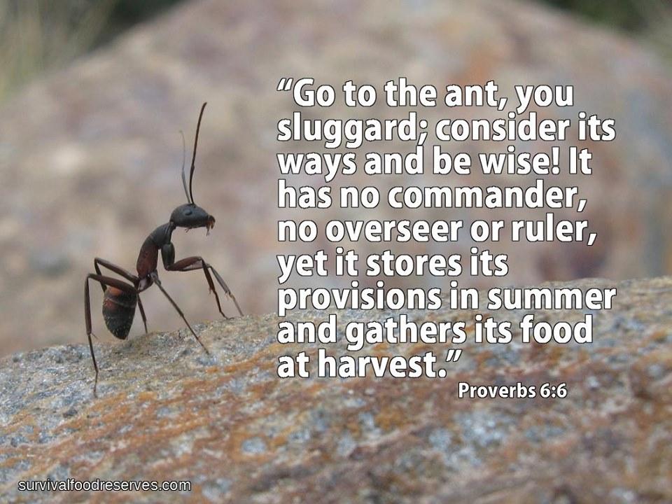 Proverbs 6:6