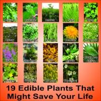 Wild Edible Plants in your Backyard! (HD)  SurvivalKit.com