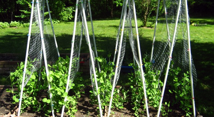 Wire Hanger Plant Trellis