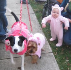 2010-Three Little Piggies