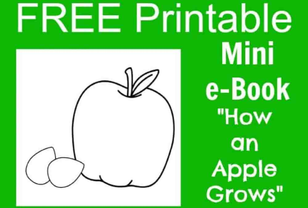 medium resolution of FREE Apple Life Cycle Printable e-Book for Kids