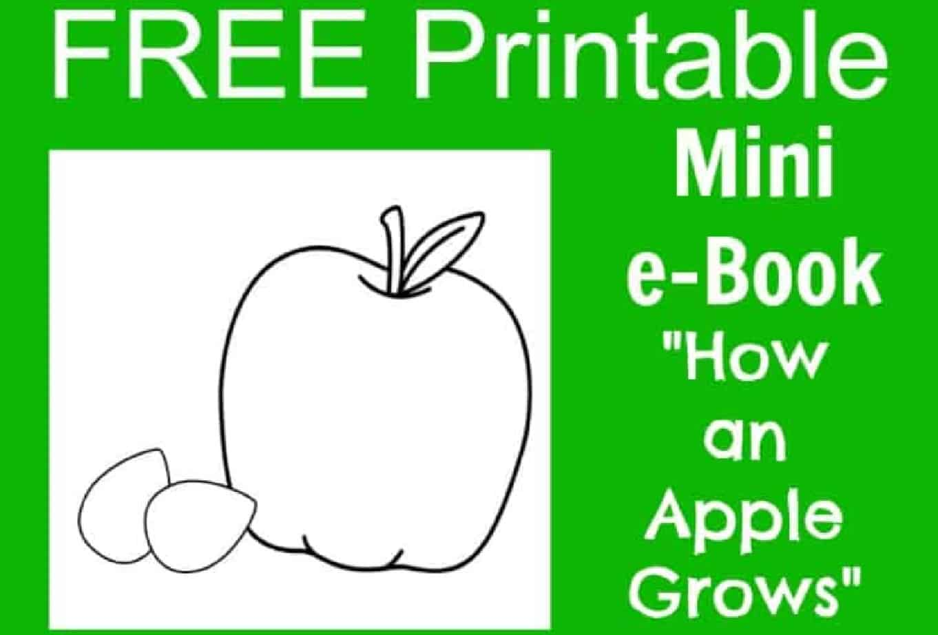 hight resolution of FREE Apple Life Cycle Printable e-Book for Kids