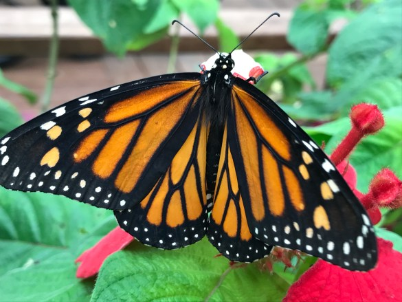 butterfly_22_butterfly-atrium-excursion