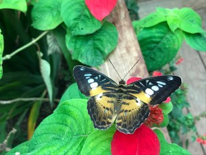 spending-the-day-with-butterflies