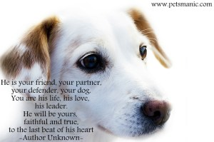 dog-is-your-forever-friend-300x199 Survivors and our pets, an unbreakable bond.
