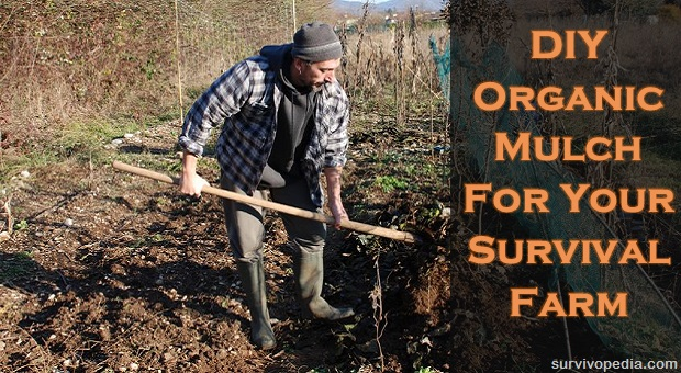 farmer uses a fork to mix leaf mulch into the upper layer of soil and turns it over with a pitch fork