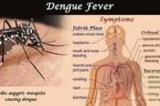 बर्दिबासमा डेंगुका रोगी बढे
