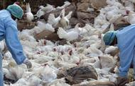 Monitoring in bordering districts in wake of bird flu outbreak in India