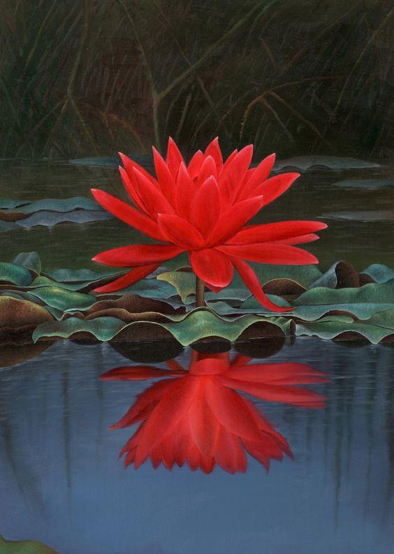 सत्खुलवा तालमा रातो कमलको फूल हेर्न आउने पर्यटकको घुुइँचो
