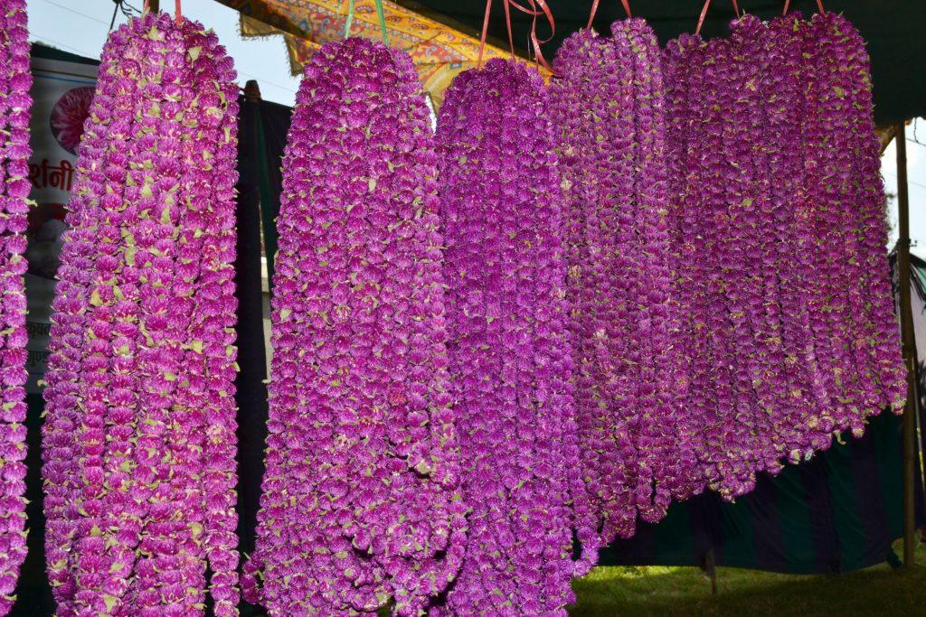 भारतीय फूल विस्थापन गर्न चाहन्छन् तिलोत्तमाका