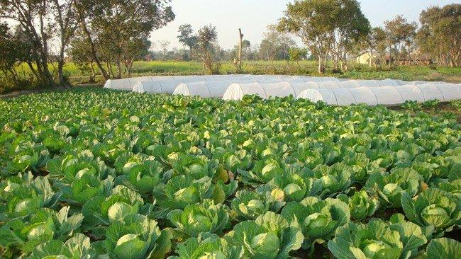 नुवाकोटमा जैविक कृषि फार्म सञ्चालनमा