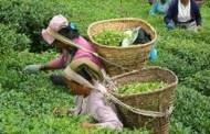 मुख्यमन्त्री सामु चिया किसान र उद्यमीको गुनासो