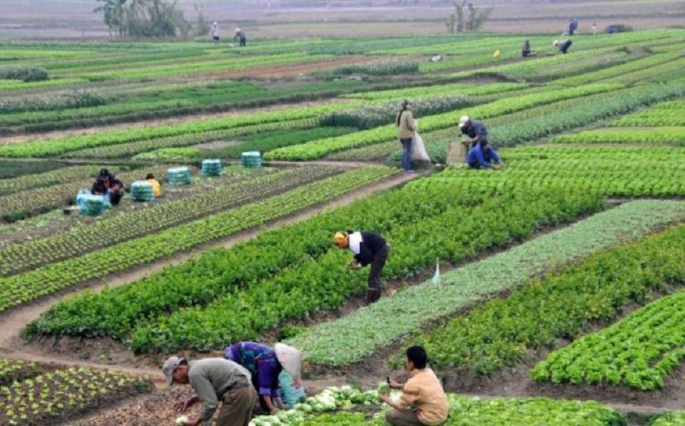 राजनीतिमा लागेका युवाले कृषि पेशालाई व्यवहारमा लागु गर्न थाले