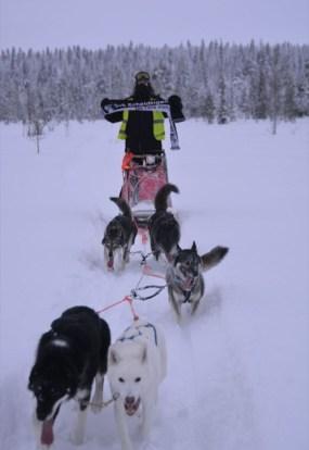 Matthias Struwe Muonio in Lappland auf Huskytour 03.01.208