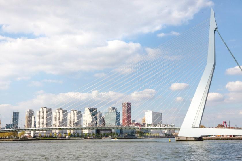 Fotograf holland Rotterdam Erasmusbruecke Schwan 5