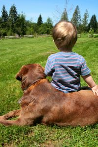 contentment of a boy and his dog