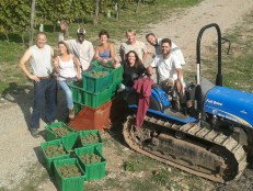 our team and the end of the 2014 vendemmia