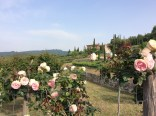 roses with a view