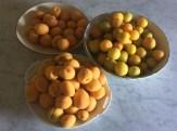stonefruit