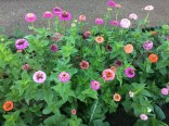 flowers in the orto