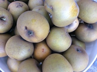 russets
