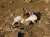 our bunnies