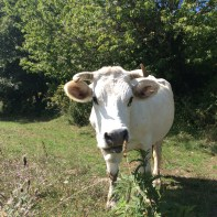 Late summer in the high pastures of Abruzzo.