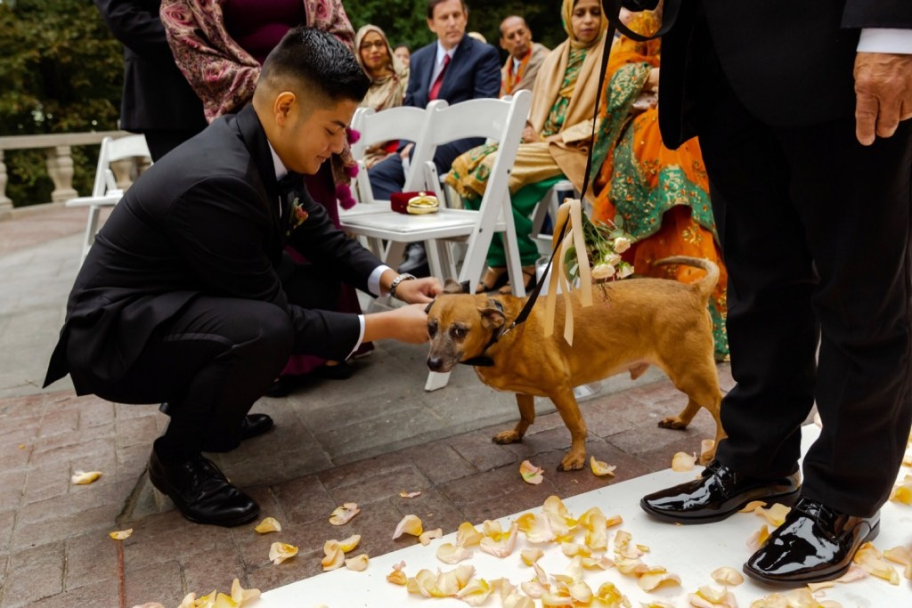 One groomsman taking out a wedding ring from a dog at the Tappan Hill Mansion.