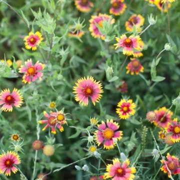 Love Austin: wildflowers