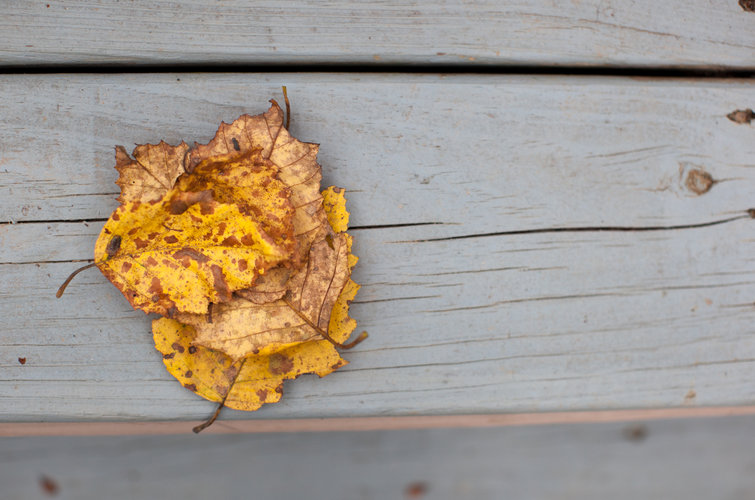 a summer of brown leaves falling