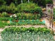Gardening, West Sussex, East Sussex