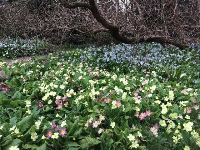 Highdown Gardens, Worthing