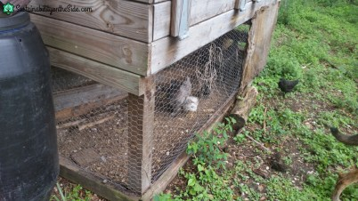 Chicken coop broody area