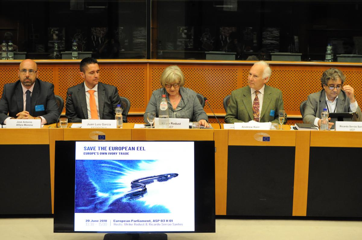"""Save the European eel"" - SEG event at the European Parliament, 20 June 2018"