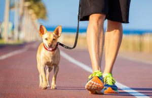 Exercise With Your Dog!
