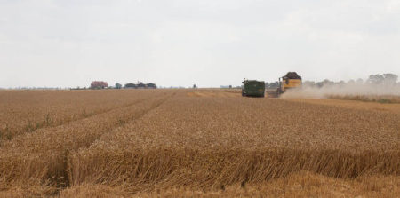 A Field of Wheat: whose art?